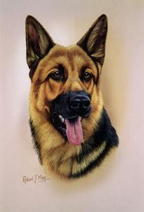 German Shepherd Head Study Print RMDH77